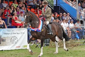 The show championship went to Clive Storey from Yetholm on Masquerade.