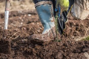 Scotland has smashed its tree planting target for the first time and the Scottish Government has raised its target to 12,000 hectares for the coming year