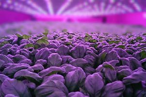 Vertical farming involves growing crops in stacked indoor layers, using less land than traditional methods, enabling year-round production. Picture: Contributed