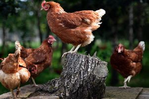 All eggs will be free range.