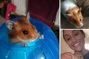 50 Cent the hamster with Ana McKinlay. Pic: SWNS