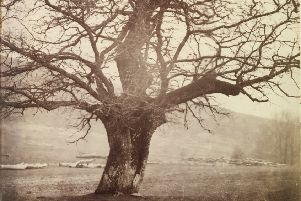 Study of an ancient oak tree, Ashdown Park, Berkshire c.1854 by William, 2nd Earl of Craven