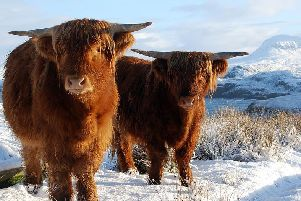 Scotland's higher plains have already had their first snowfall of 2020. Picture: Shutterstock