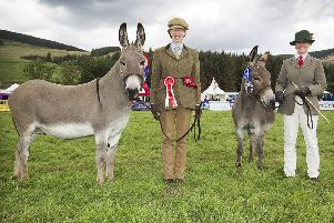 Champion Donkey went to Alison Robertson and Reserve to Kendall Young