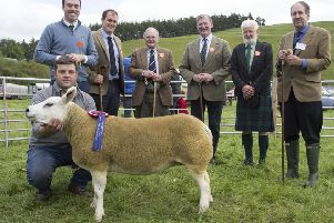 Mr D Douglas( any other breed ) Mr J Kay(Blackface Sheep) Mr W Anderson( Hill Cheviot Untouched ) Mr J Elliot( Afternoon Classes) Mr J Burn(Rare & Minority Breeds) with the Show Chairman David Anderson on the end. Over all winner : Graham Cakebread from Commonside Hawick.